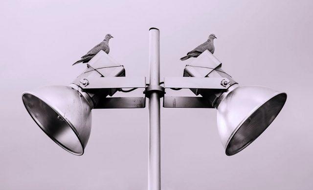 duiven op een lamp